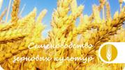 элитные семена  зерновых культур