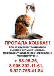 Пропала кошка!!! Просим помощи!!!
