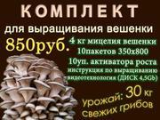 Комплект для выращивания грибов вешенка